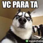 vc_para