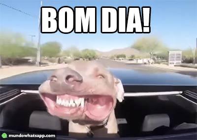Bom Dia Do Cão Status E Imagens