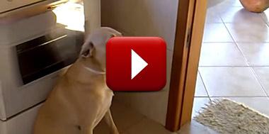 cachorro_apronta