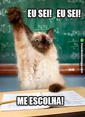 Gato Esperto Status E Imagens