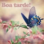 BoaTarde2